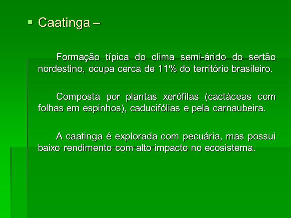 Caatinga – Formação típica do clima semi-árido do sertão nordestino, ocupa cerca de 11% do território brasileiro.