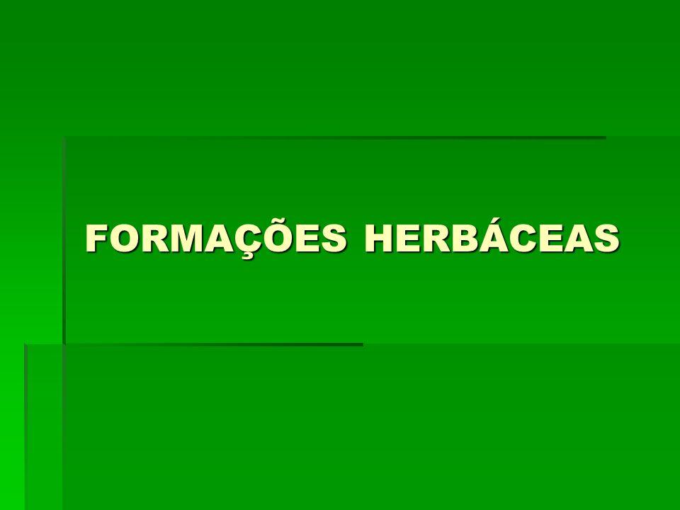 FORMAÇÕES HERBÁCEAS