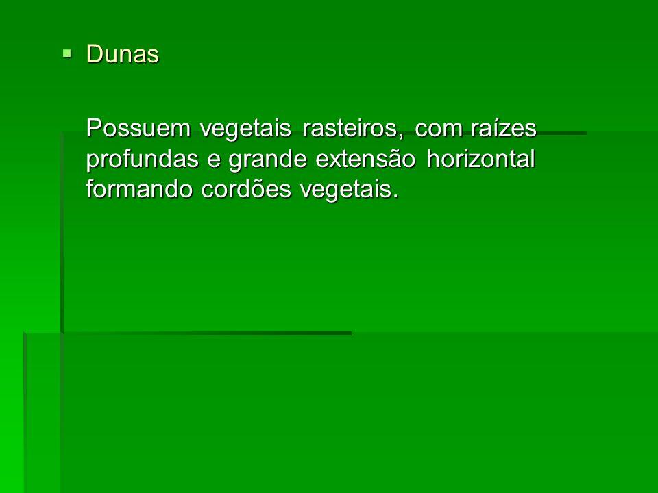 Dunas Possuem vegetais rasteiros, com raízes profundas e grande extensão horizontal formando cordões vegetais.