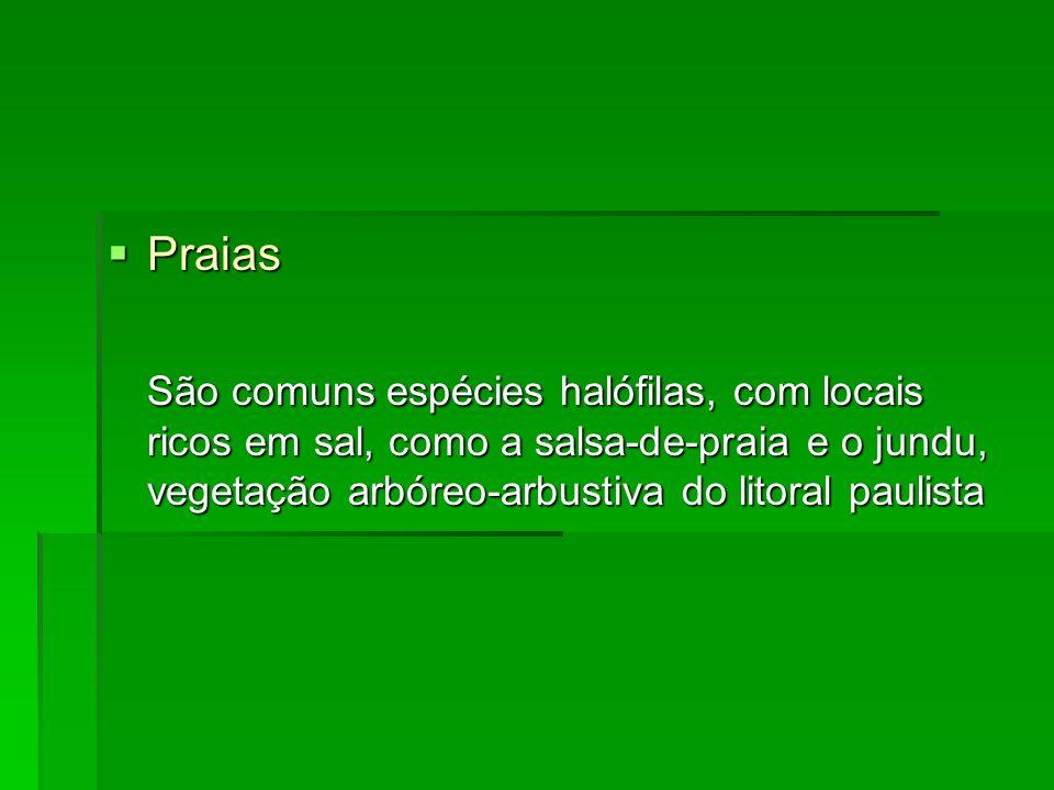 Praias São comuns espécies halófilas, com locais ricos em sal, como a salsa-de-praia e o jundu, vegetação arbóreo-arbustiva do litoral paulista.