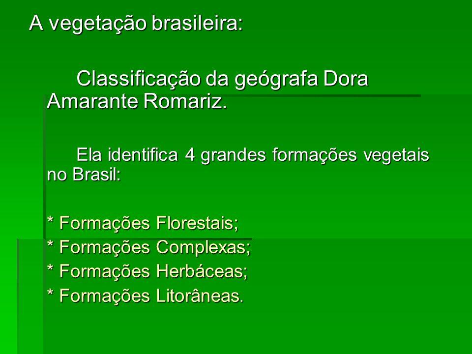 A vegetação brasileira: