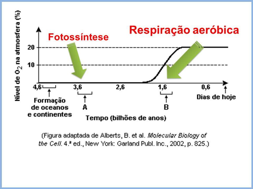 Respiração aeróbica Fotossíntese