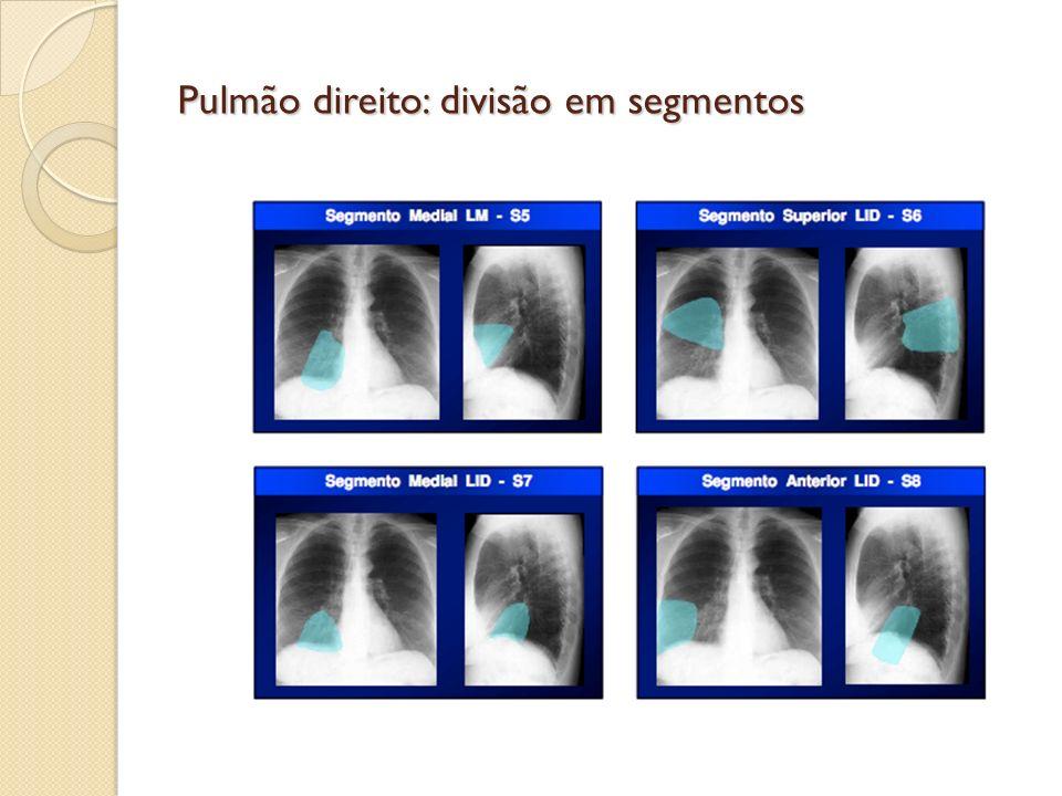 Pulmão direito: divisão em segmentos