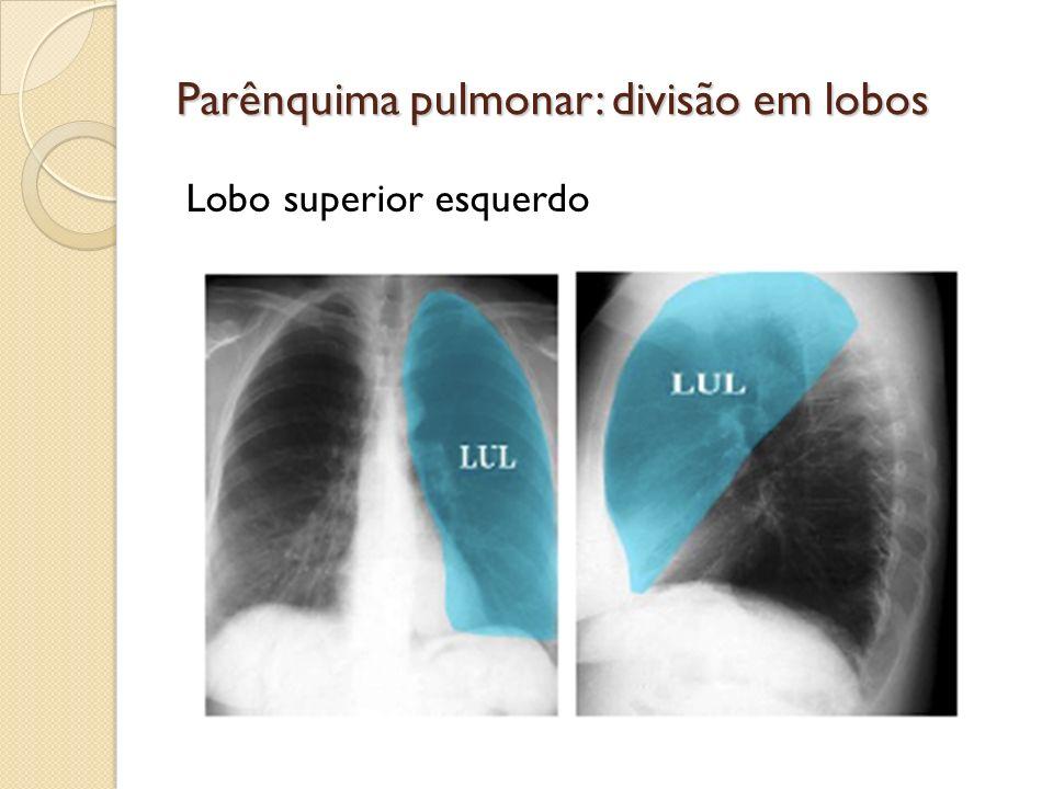 Parênquima pulmonar: divisão em lobos