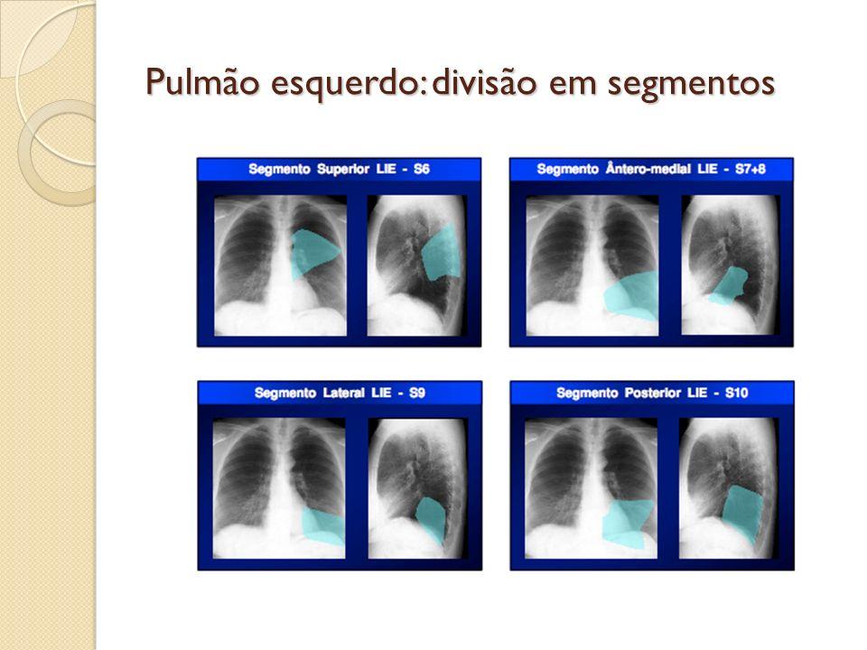 Pulmão esquerdo: divisão em segmentos