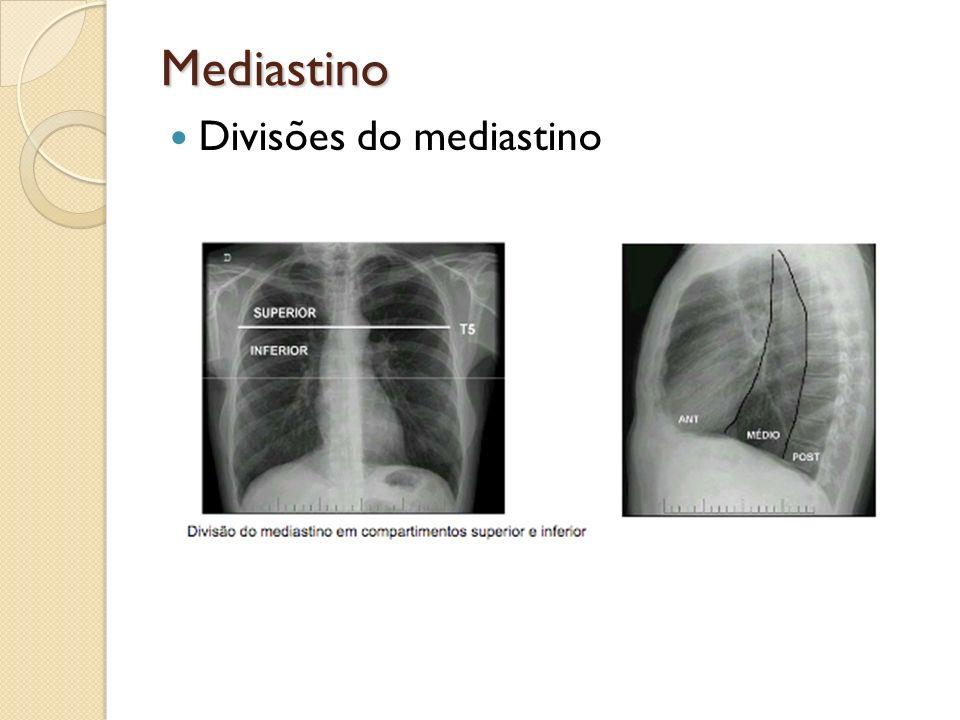 Mediastino Divisões do mediastino