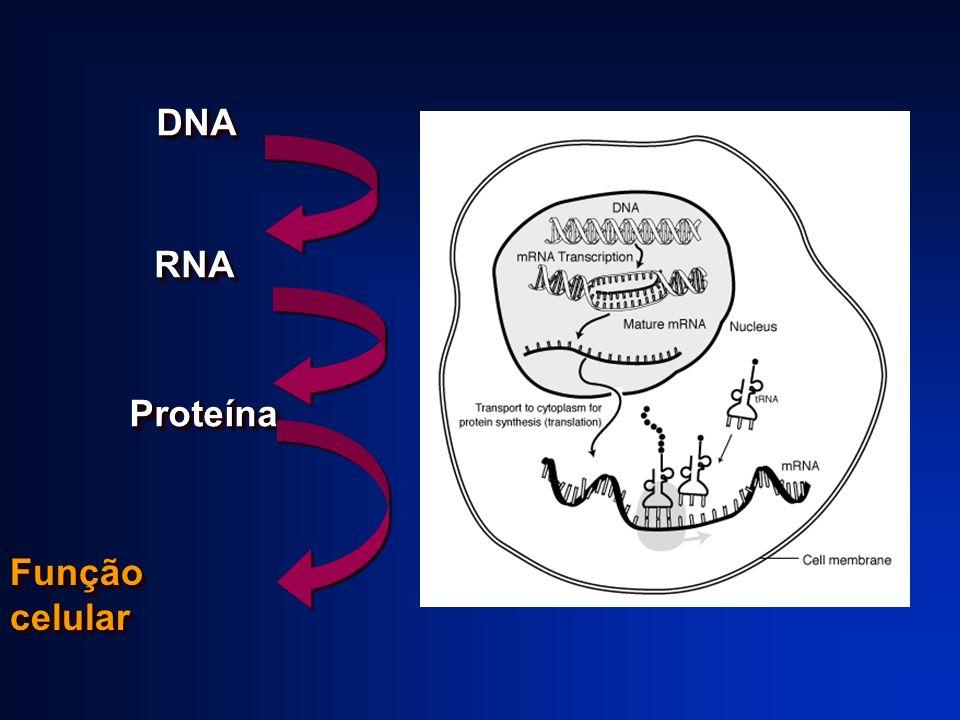 DNA RNA Proteína Função celular
