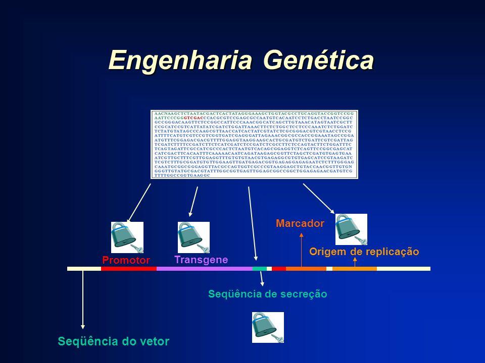 Engenharia Genética Seqüência do vetor Marcador Origem de replicação