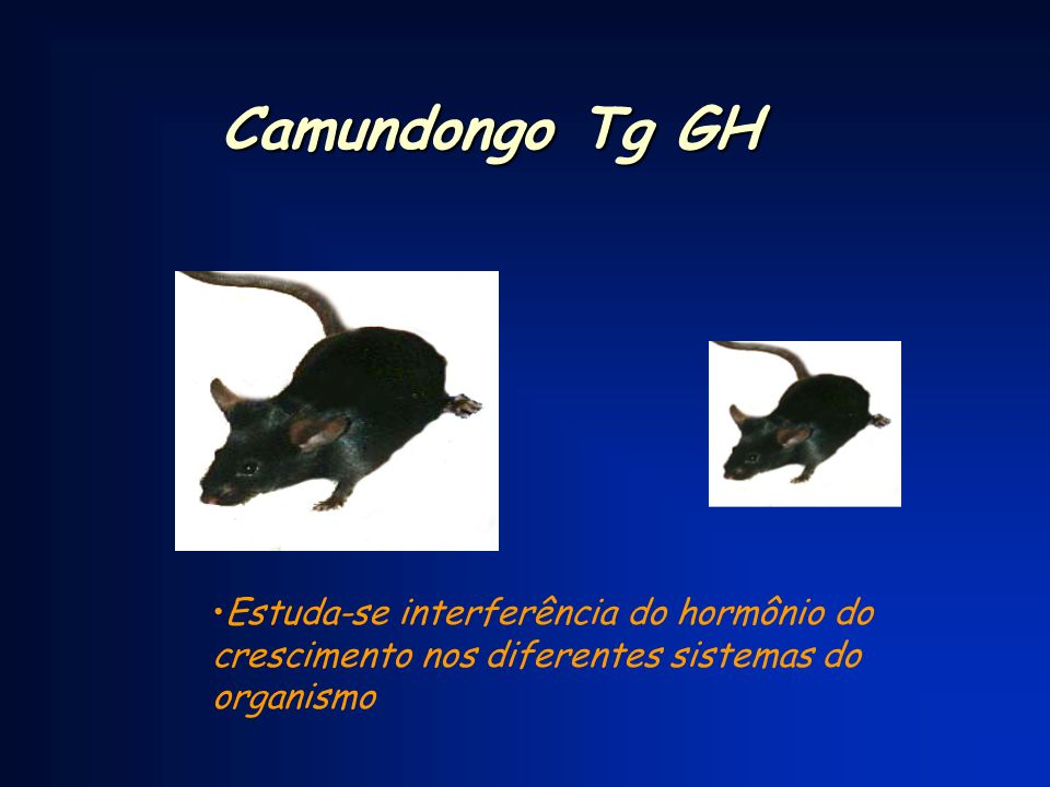 Camundongo Tg GH Estuda-se interferência do hormônio do