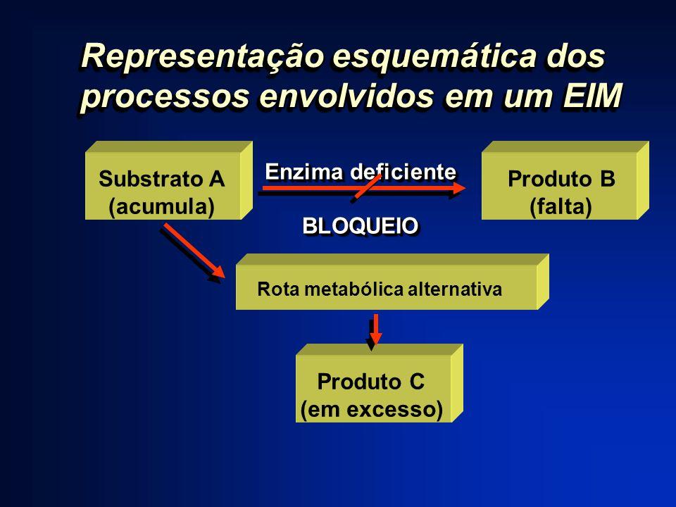 Representação esquemática dos processos envolvidos em um EIM