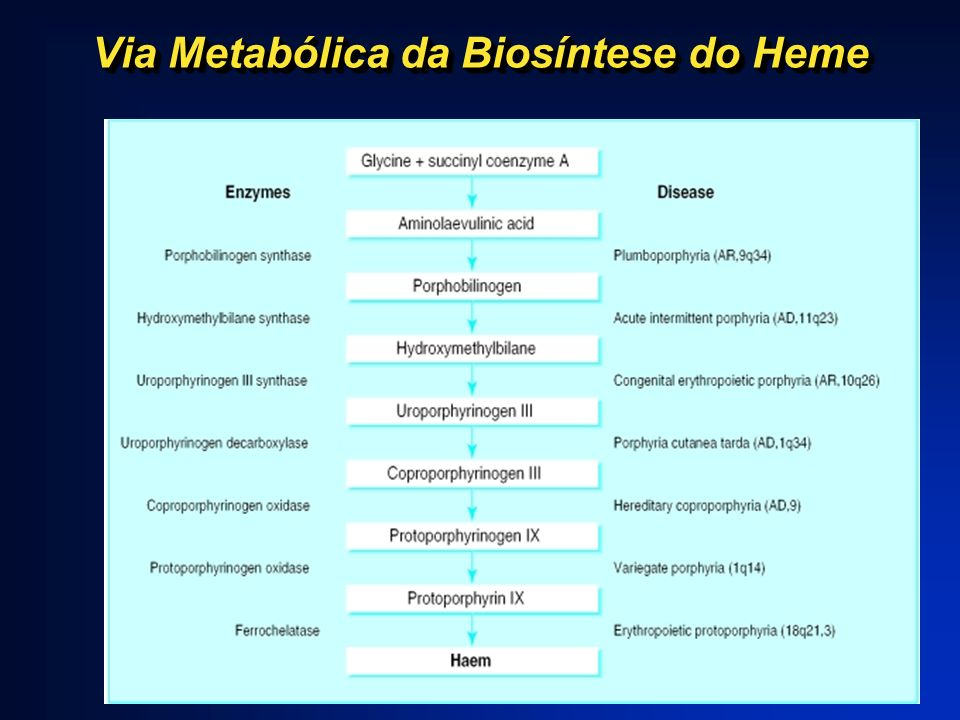 Via Metabólica da Biosíntese do Heme