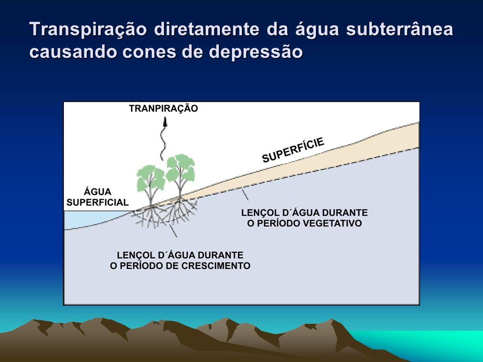 Transpiração diretamente da água subterrânea causando cones de depressão