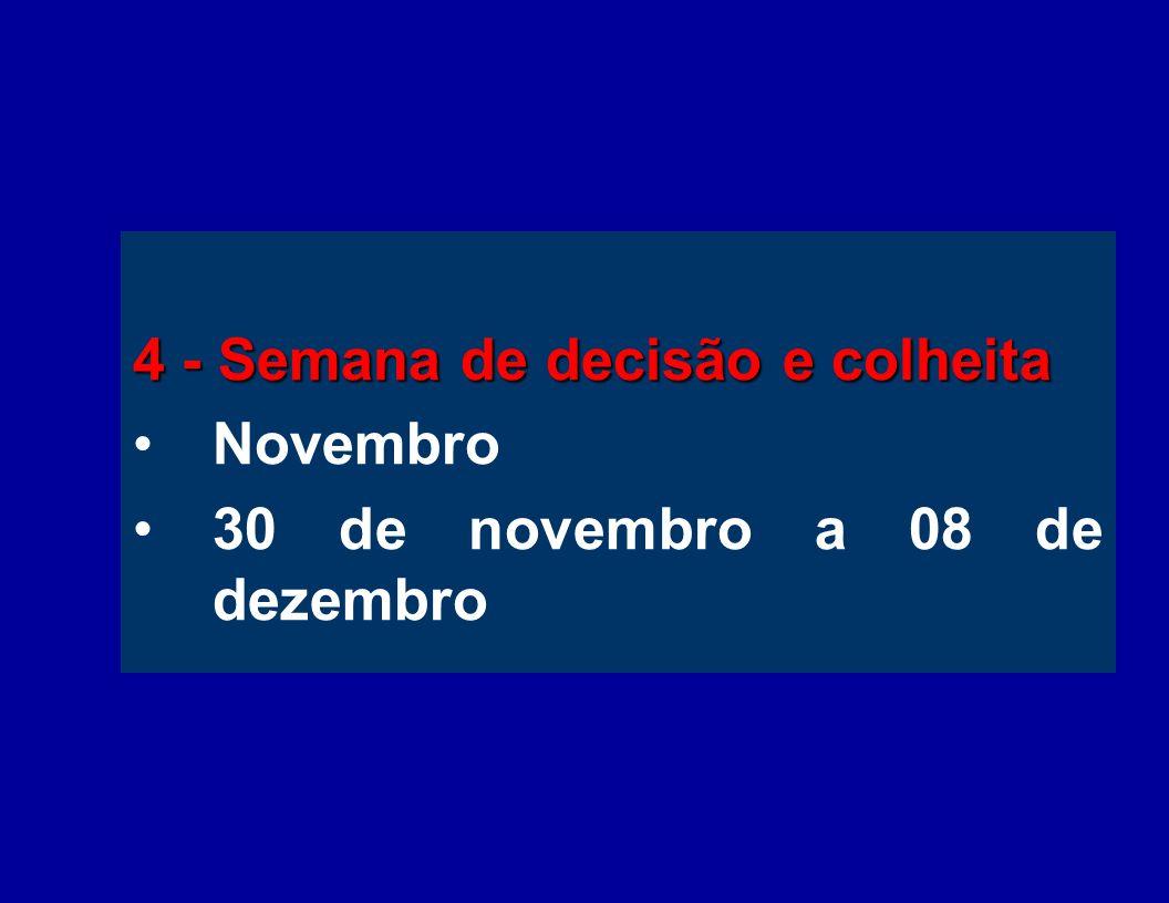 4 - Semana de decisão e colheita Novembro 30 de novembro a 08 de dezembro