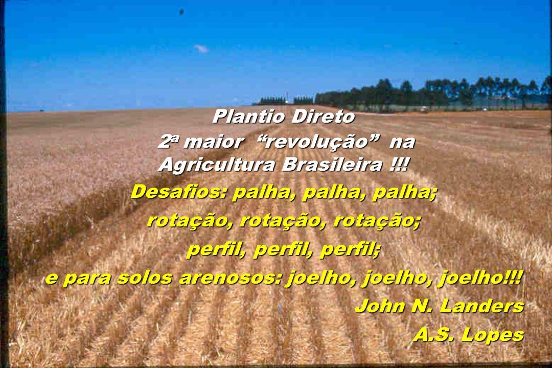 Agricultura Brasileira !!! Desafios: palha, palha, palha;
