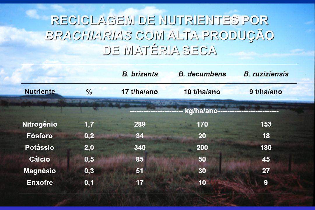 RECICLAGEM DE NUTRIENTES POR BRACHIARIAS COM ALTA PRODUÇÃO