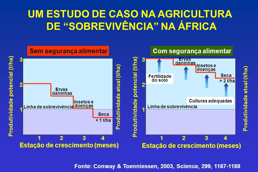 UM ESTUDO DE CASO NA AGRICULTURA DE SOBREVIVÊNCIA NA ÁFRICA