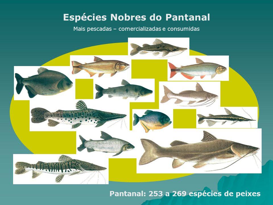 Espécies Nobres do Pantanal