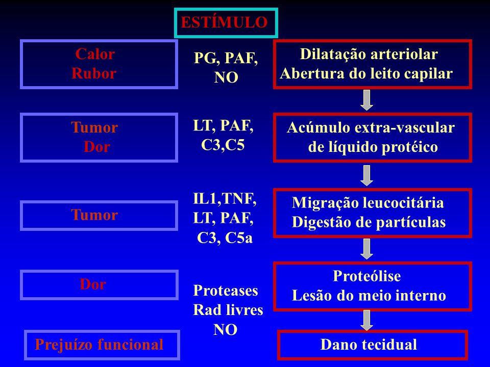 ESTÍMULO Calor. Rubor. Dilatação arteriolar. Abertura do leito capilar. PG, PAF, NO. Tumor. Dor.