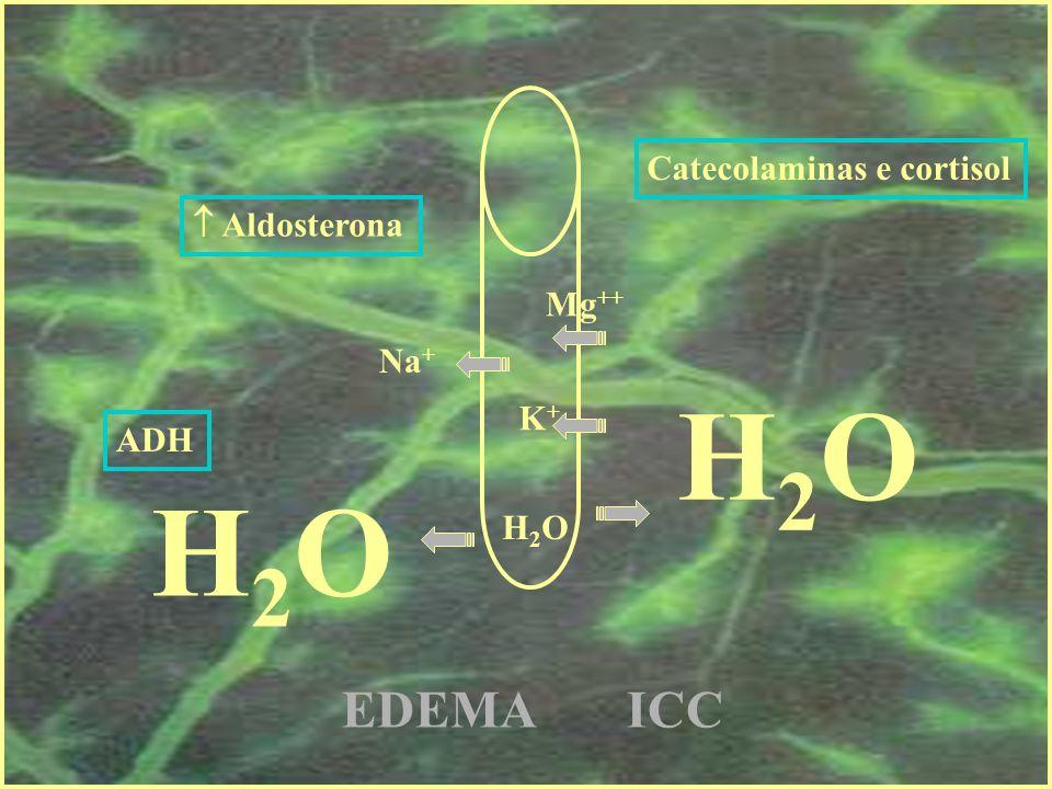 H2O H2O EDEMA ICC Catecolaminas e cortisol  Aldosterona Mg++ Na+ K+
