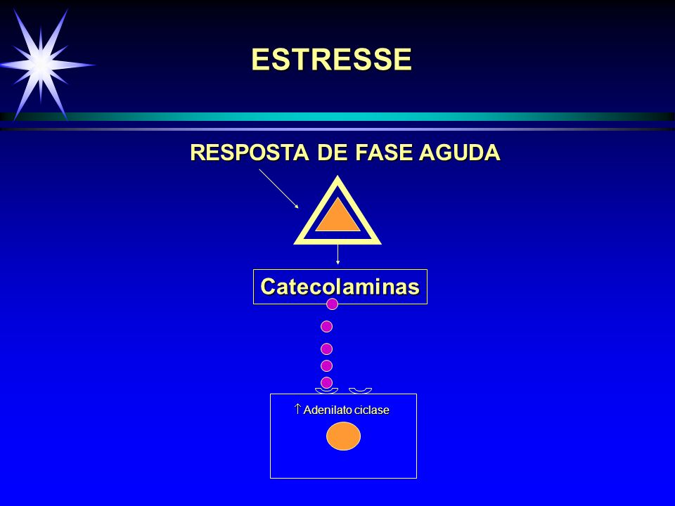 ESTRESSE RESPOSTA DE FASE AGUDA Catecolaminas  Adenilato ciclase
