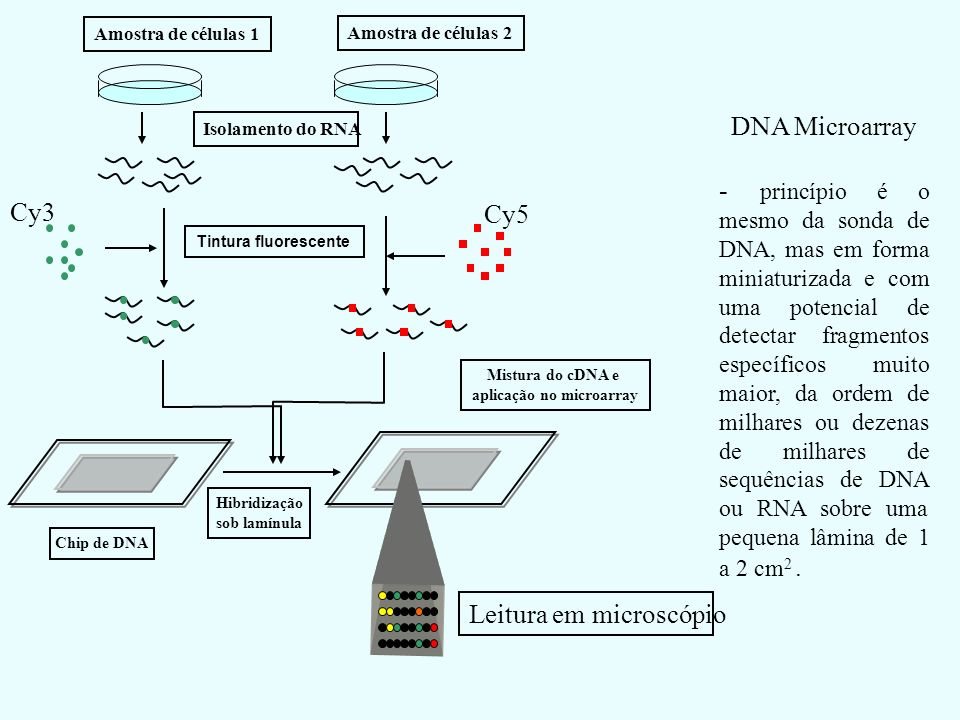 aplicação no microarray