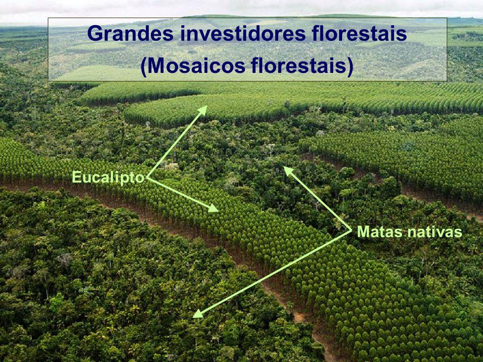 Grandes investidores florestais (Mosaicos florestais)