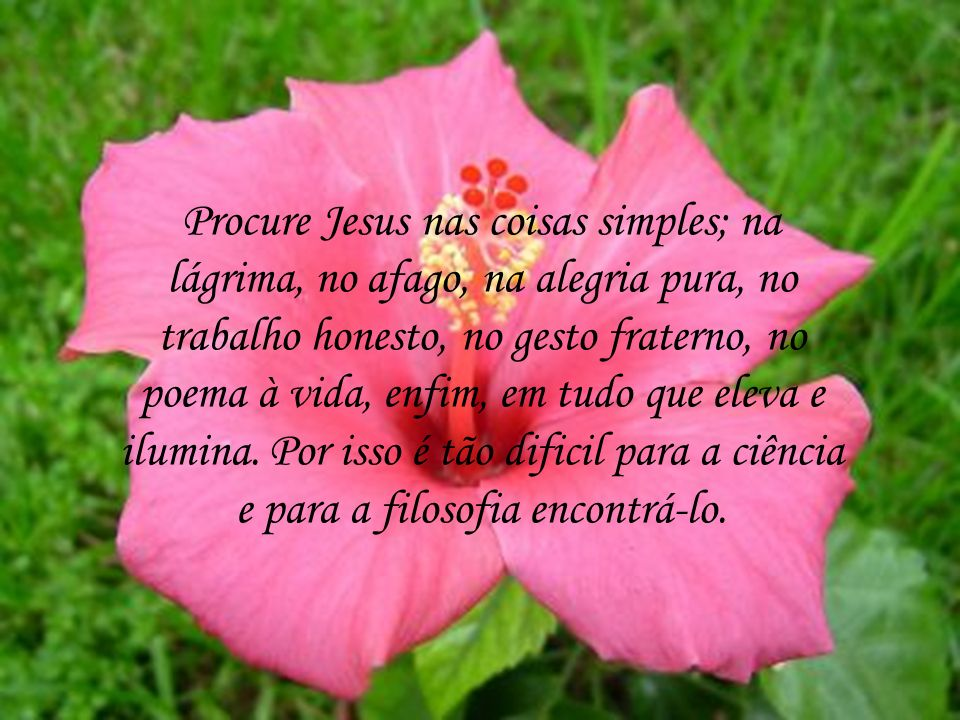 Procure Jesus nas coisas simples; na lágrima, no afago, na alegria pura, no trabalho honesto, no gesto fraterno, no poema à vida, enfim, em tudo que eleva e ilumina.