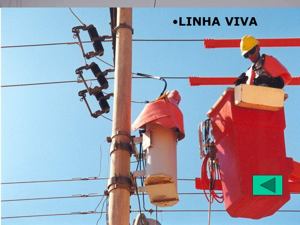 LINHA VIVA