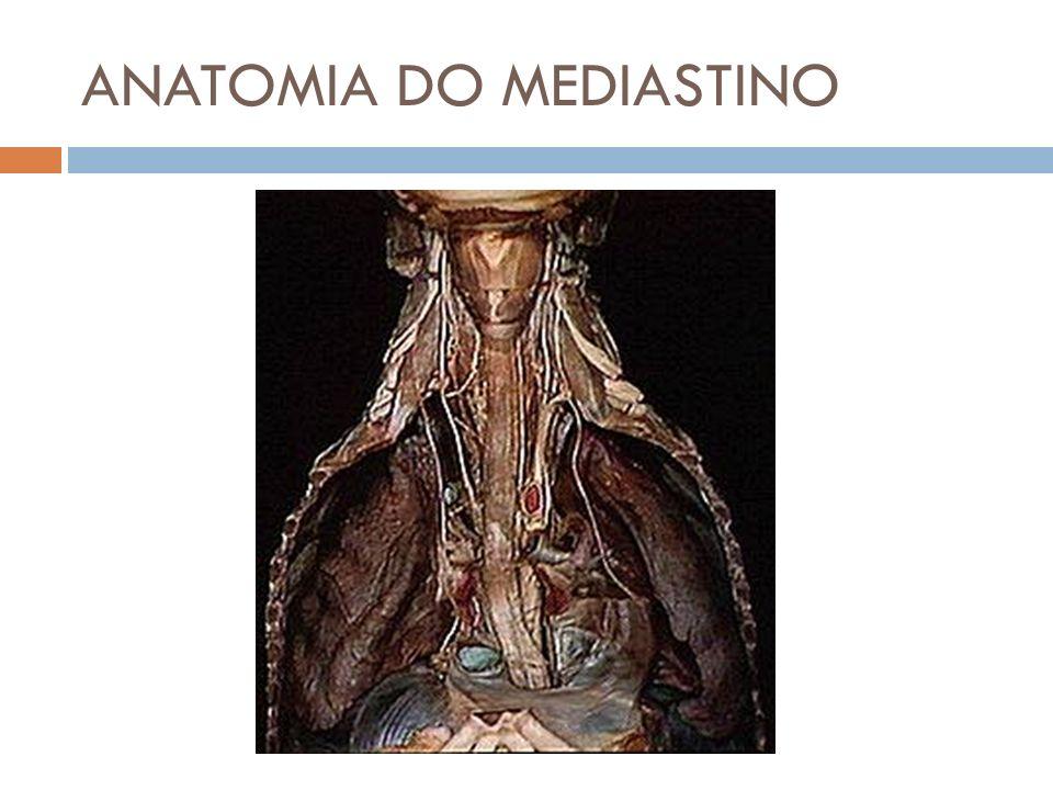 ANATOMIA DO MEDIASTINO
