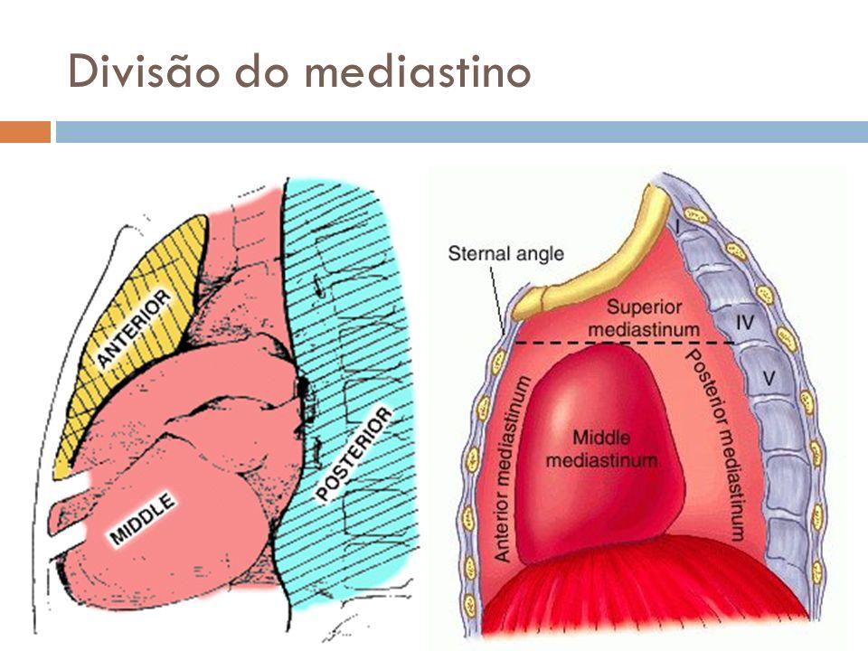 Divisão do mediastino