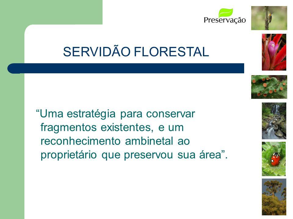 SERVIDÃO FLORESTAL Uma estratégia para conservar fragmentos existentes, e um reconhecimento ambinetal ao proprietário que preservou sua área .