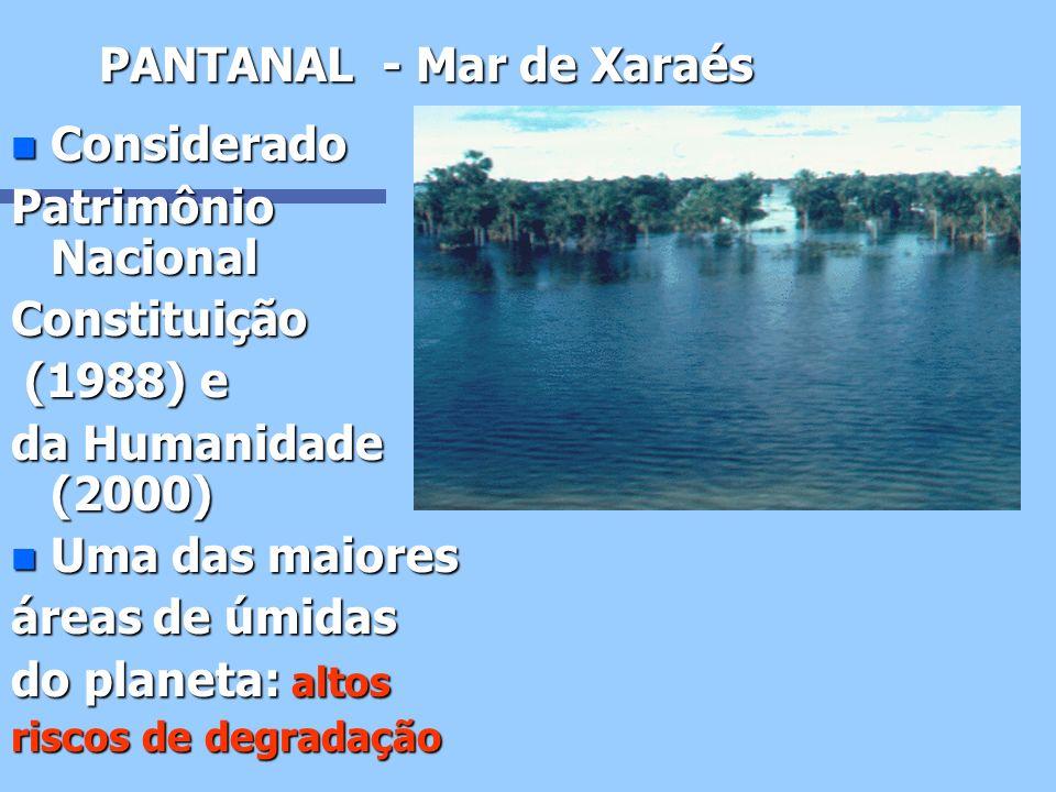 PANTANAL - Mar de Xaraés