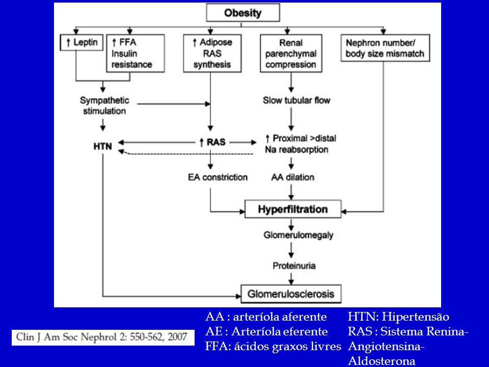 AA : arteríola aferente