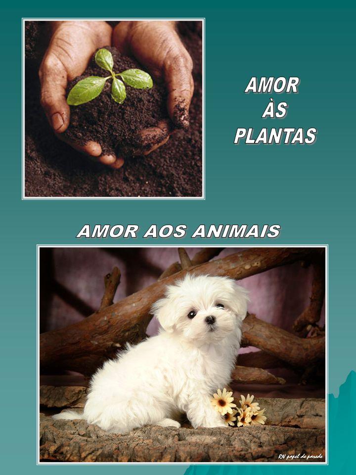 AMOR ÀS PLANTAS AMOR AOS ANIMAIS