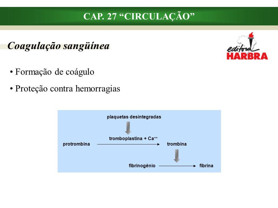 Coagulação sangüínea CAP. 27 CIRCULAÇÃO Formação de coágulo