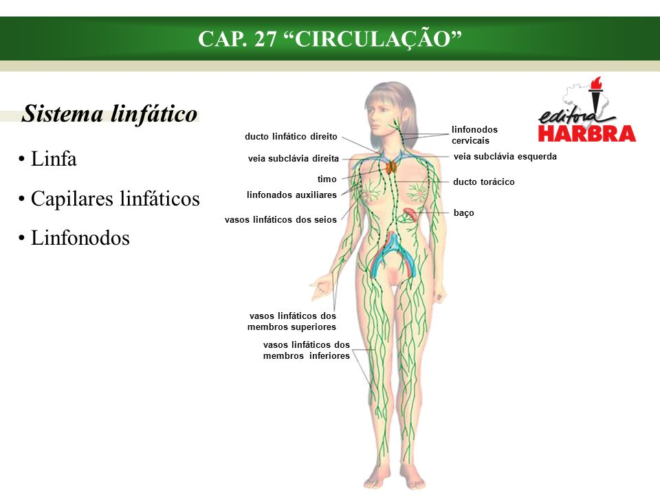 Sistema linfático CAP. 27 CIRCULAÇÃO Linfa Capilares linfáticos