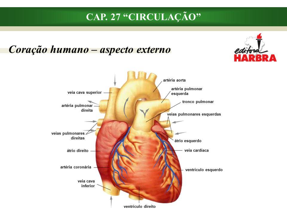 Coração humano – aspecto externo