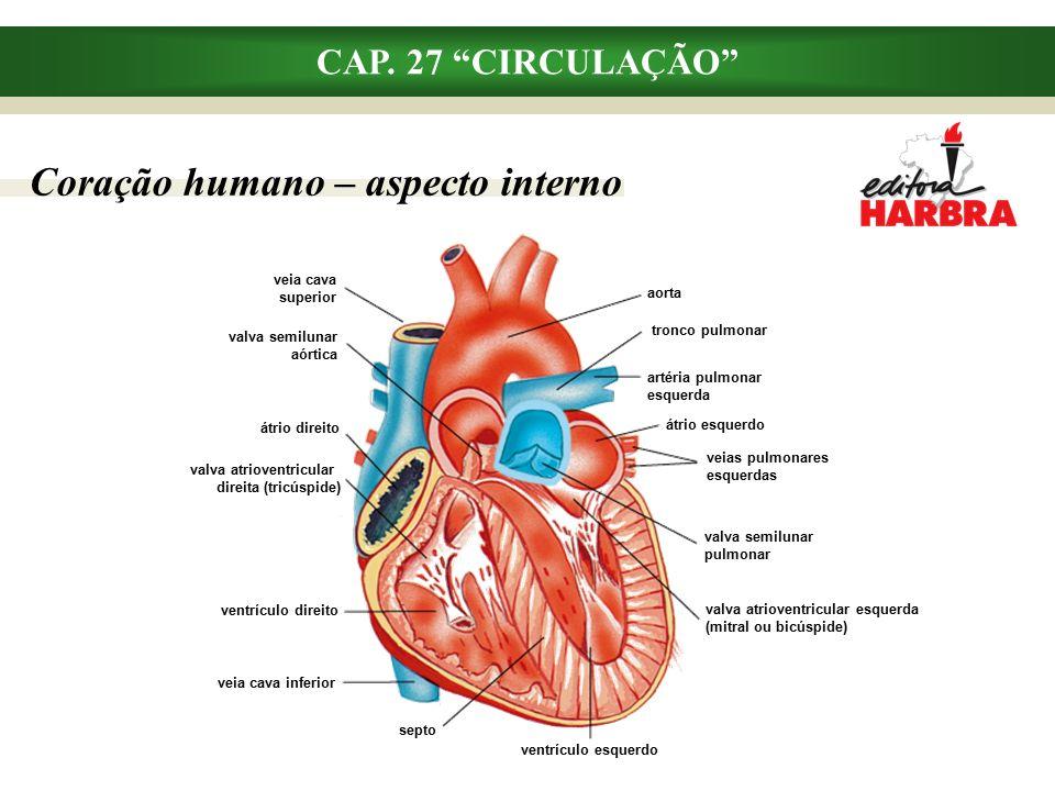 Coração humano – aspecto interno