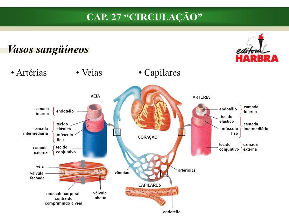 músculo corporal contraído comprimindo a veia