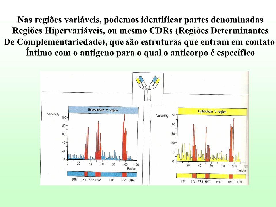 Nas regiões variáveis, podemos identificar partes denominadas