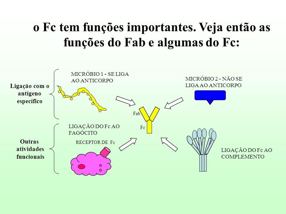 o Fc tem funções importantes. Veja então as