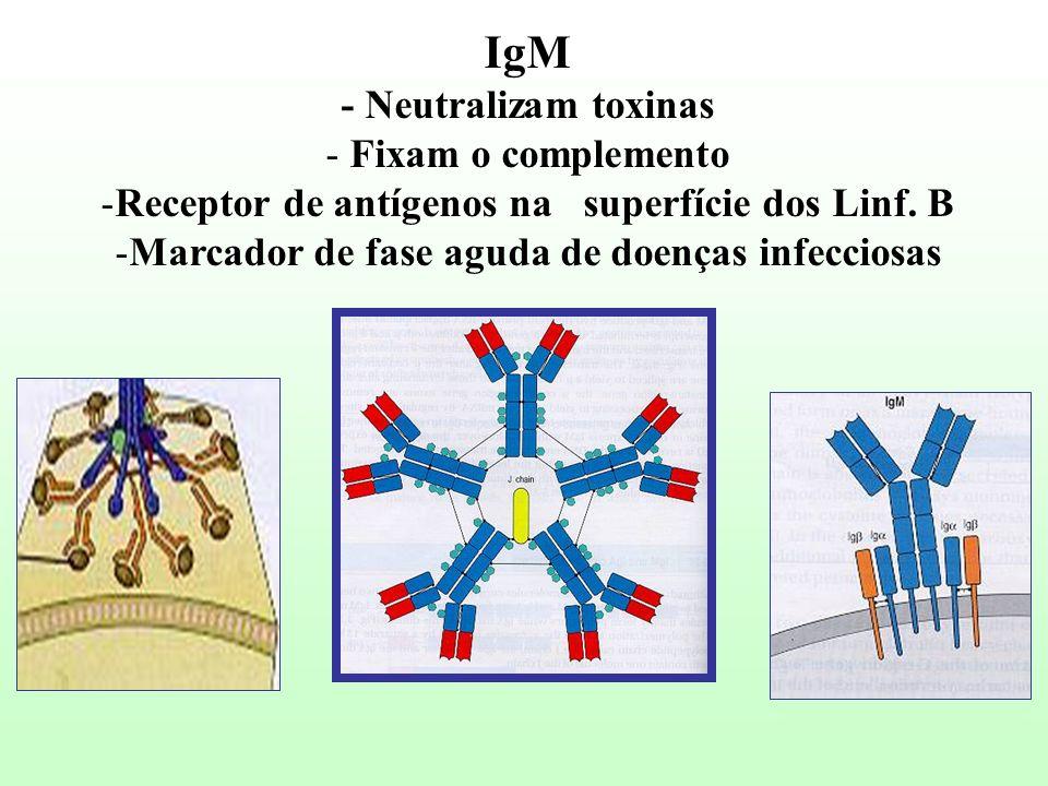 IgM - Neutralizam toxinas Fixam o complemento
