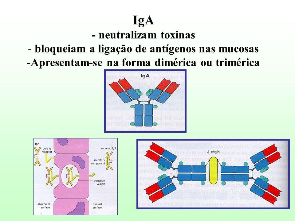 IgA - neutralizam toxinas bloqueiam a ligação de antígenos nas mucosas