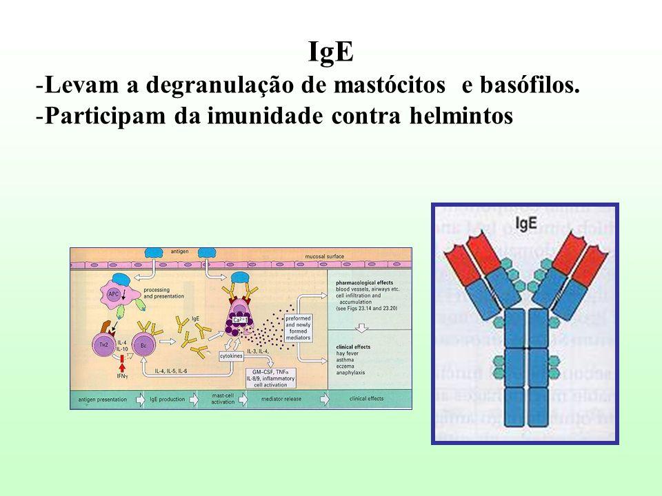 IgE Levam a degranulação de mastócitos e basófilos.