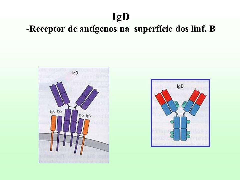 Receptor de antígenos na superfície dos linf. B