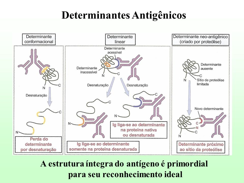 Determinantes Antigênicos