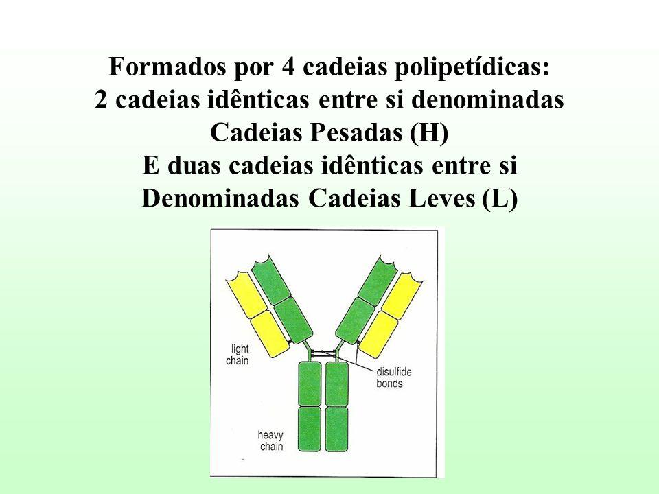 Formados por 4 cadeias polipetídicas: