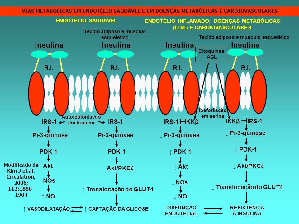 Insulina Insulina Insulina Insulina R.I. R.I. R.I. R.I. IRS-1 IRS-1