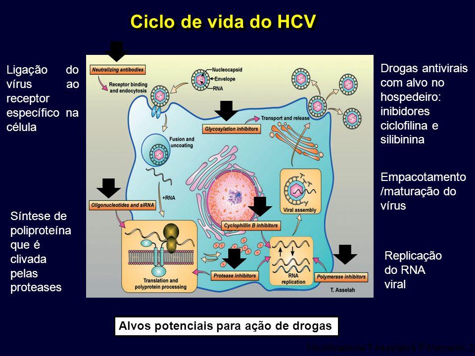 Ciclo de vida do HCV Ligação do vírus ao receptor específico na célula.