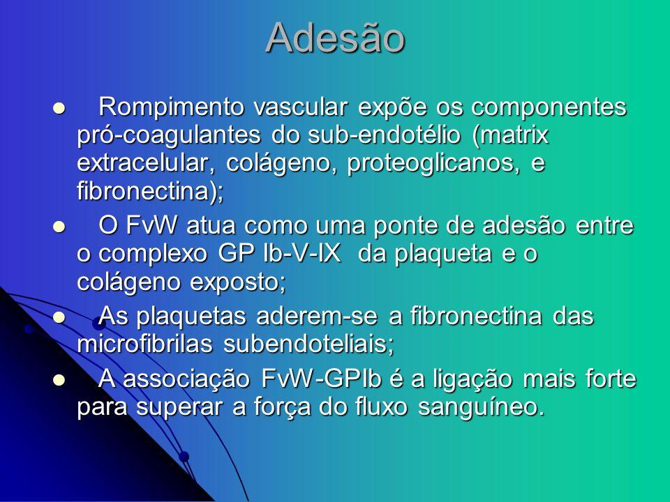 Adesão Rompimento vascular expõe os componentes pró-coagulantes do sub-endotélio (matrix extracelular, colágeno, proteoglicanos, e fibronectina);